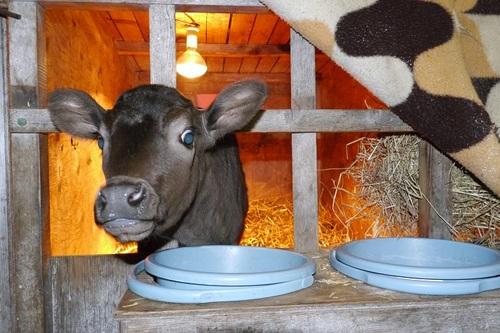 我が家の和牛ちゃん